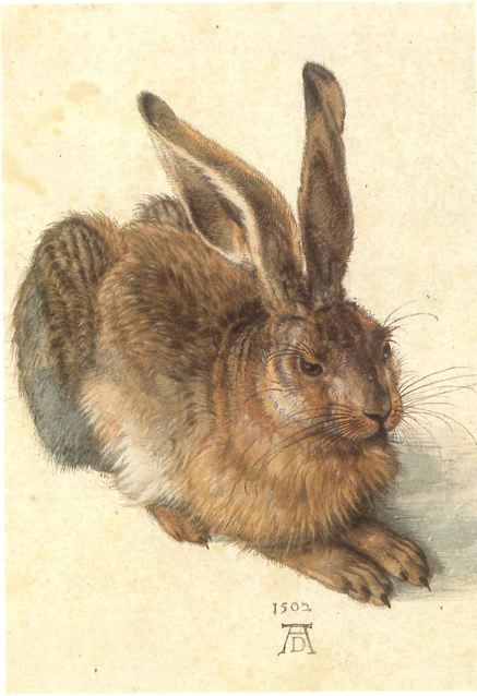 A very fine drawing by Durer drybrushed in watercolour